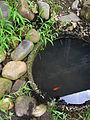 Pond -Echigo Tsumari.jpg