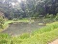 Pond View 20170706 160342.jpg