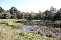 Pond at Wycke Meadow - geograph.org.uk - 973707.jpg