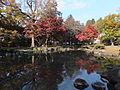 Pond in the Ikeda-shi Garden-3.jpg