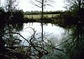 Pond on Copper Lane - geograph.org.uk - 1238293.jpg