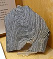 Porpoise Cove (Nuvvuagittuq) banded iron formation, northern Quebec, metamorphosed 3.8 billion years ago, magnetite and quartz - Redpath Museum - McGill University - Montreal, Canada - DSC07889.jpg