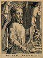 Portrait of Andreas Vesalius (1514 - 1564), Flemish anatomist Wellcome V0006028EL.jpg