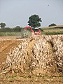 Potato harvest in progress - geograph.org.uk - 982737.jpg