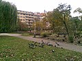 Praha, Nové Město, Karlovo náměstí, holubi (T).jpg