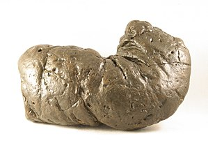 Coprolite - A large Miocene coprolite from South Carolina, USA.
