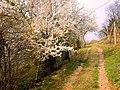 Primavera a Fornello - panoramio.jpg