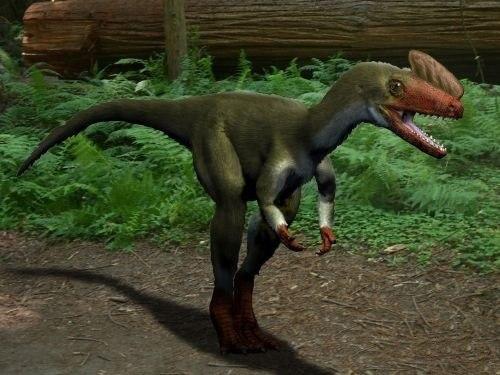Proceratosaurus NT