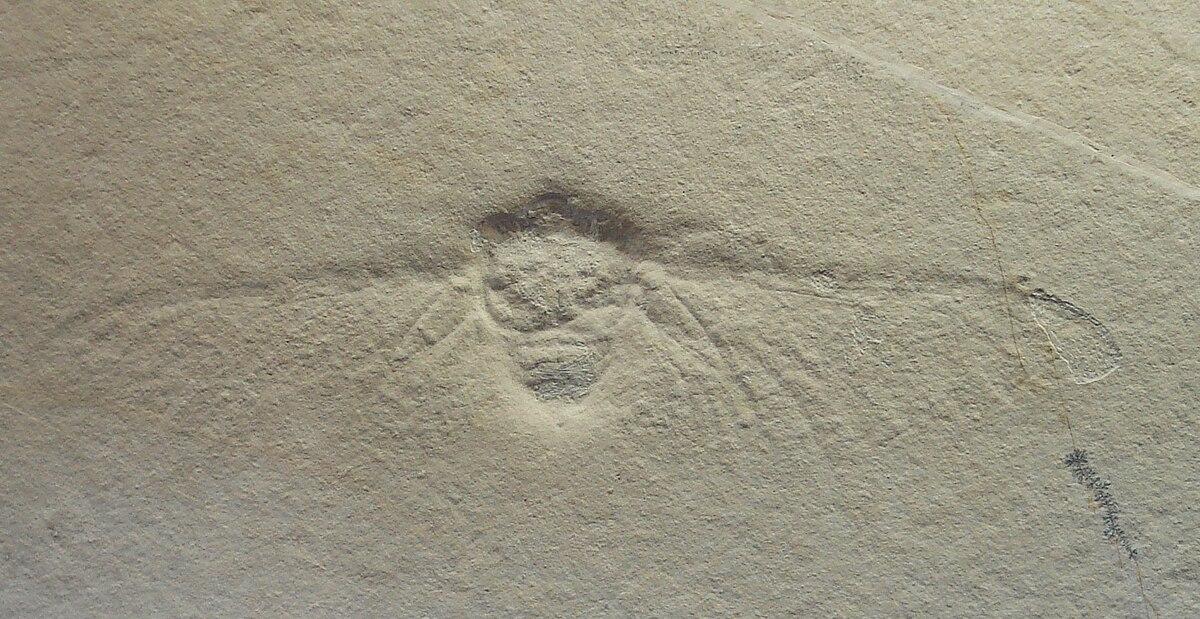 Palaeontinidae Wikipedia