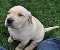Puppy(5).jpg