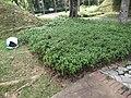 Putrajaya's Botanical Garden 22.jpg