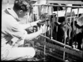 Queensland State Archives 1717 Cattle property Upper Coomera Gold Coast July 1954.png