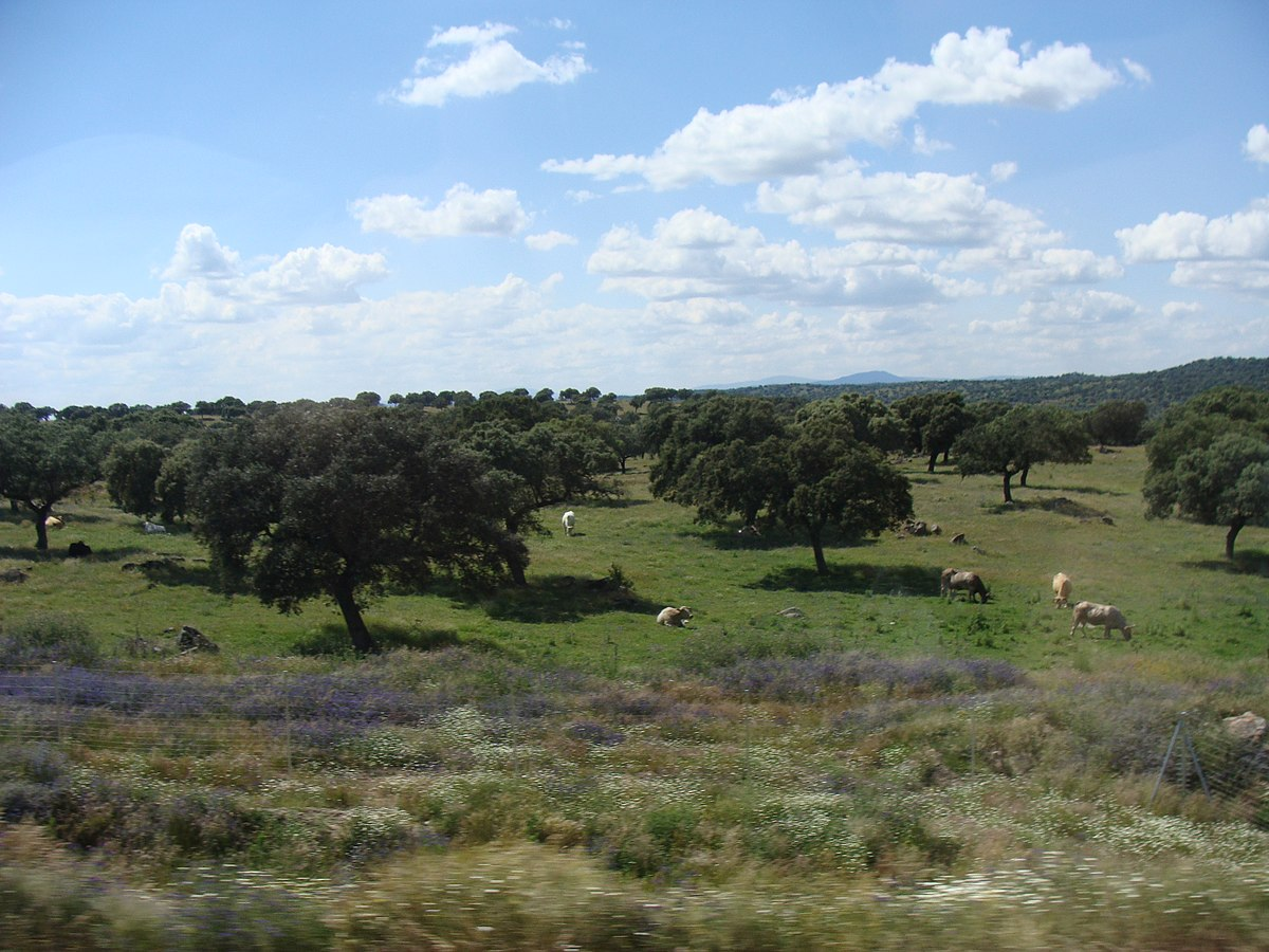 Dehesa wikipedia la enciclopedia libre for Clima mediterraneo de interior
