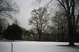 University Of Toronto President's Estate - Image: Quercus rubra 3 WPC