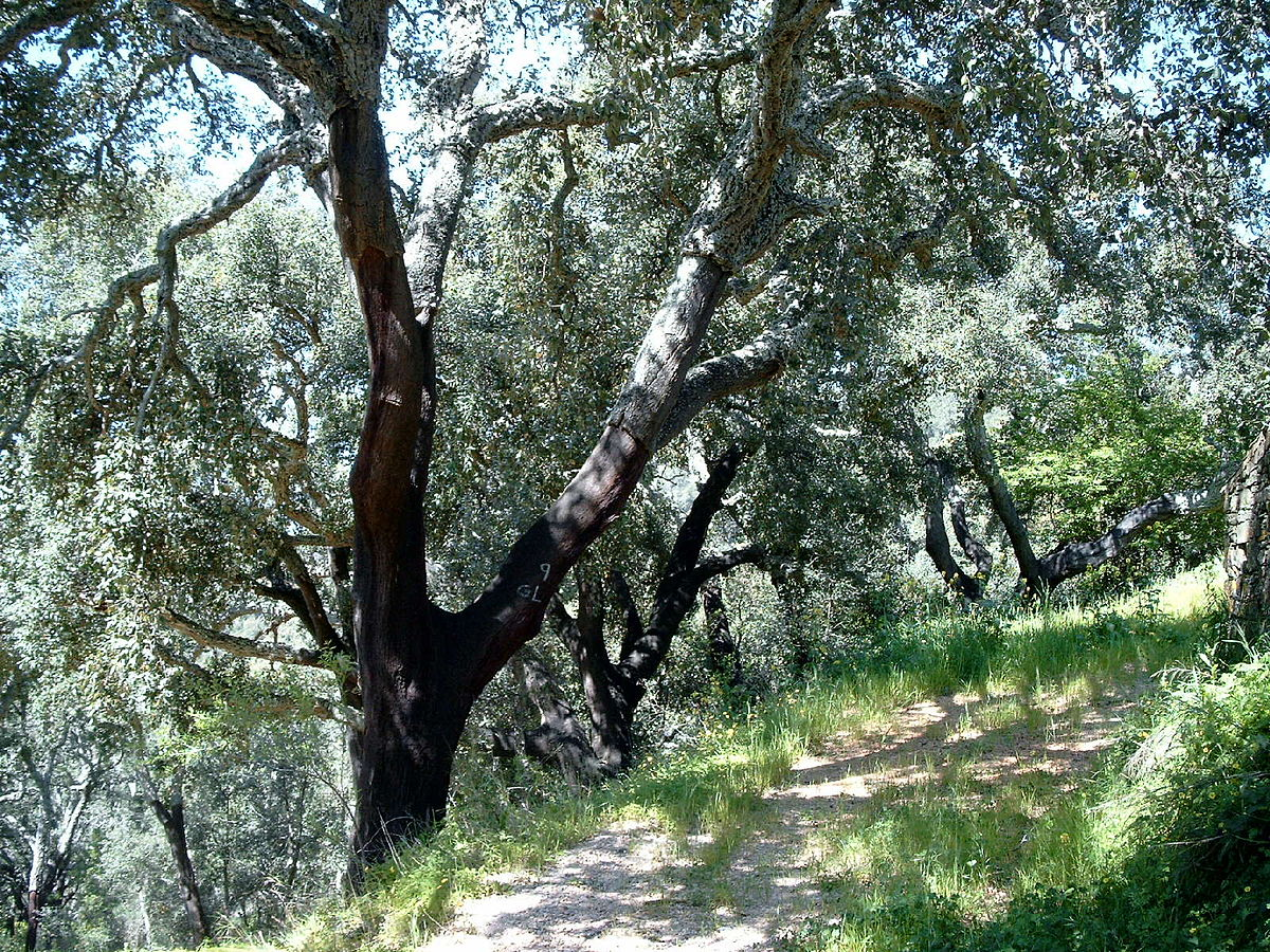 Image result for Cynometra-dominated forests and thickets