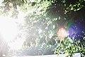 RF 0107 Festival-Area-Sunny Krists Luhaers-5 (35061288824).jpg
