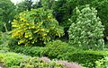 RHS Garden Harlow Carr - North Yorkshire, England - DSC01115.jpg
