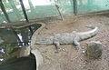 RajivGandhi Zoological Park (10).jpg