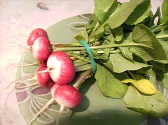 Urban horticulture - Small radish grown on a balcony in Barcelona city