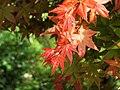 Red Leaves 紅葉 - panoramio.jpg