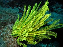 Reef4318 - Flickr - NOAA Photo Library.jpg