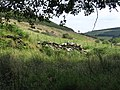 Remains of Redbrooks House - geograph.org.uk - 527358.jpg