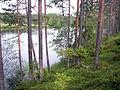 Rengårdstjärnen (Byske socken, Västerbotten, 721952-172772) 01.jpg