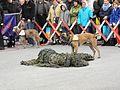Rettungshunde am Nationalfeiertag 2012 11.jpg
