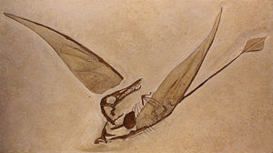 Rhamphorhynchus - Cast of the first specimen found with wing membranes, Musée de sciences naturelles de Bruxelles