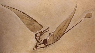Rhamphorhynchus - Cast of the first specimen found with wing membranes, Musée de sciences naturelles de Bruxelles