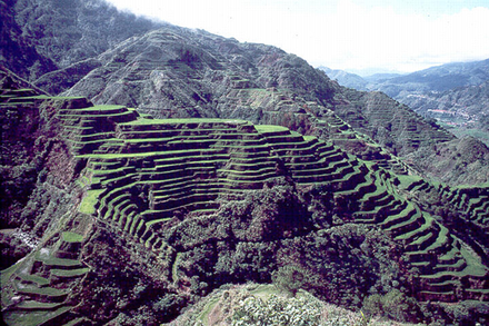 The Ifugao/Igorot people utilized terrace farming in the steep mountainous regions of northern Philippines over 2000 years ago. Rice terraces.png