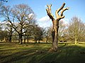 Richmond Park - geograph.org.uk - 676200.jpg