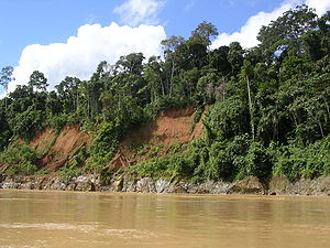 Tropical rainforest - Amazon River rain forest in Peru