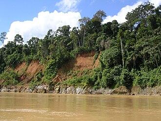 Tropical rainforest - Amazon River rain forest in Peru