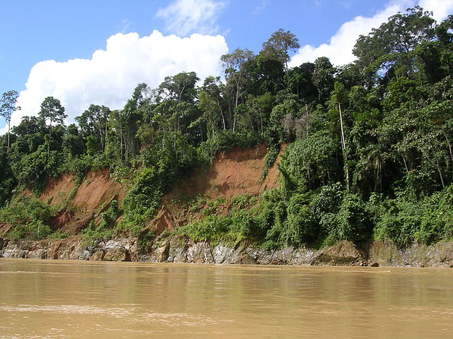 Peruvian amazon rain forest along a river
