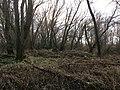 Riparian forest, Angeren.jpg