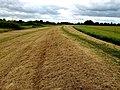 Riverside Footpath - geograph.org.uk - 1391162.jpg