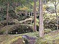 "Rocks with moss and cryptomeria japonica trees in ""Auberge Kaedenoki"" in Shin-Yabakei Valley 1.JPG"