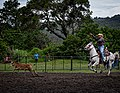 Rodeo Event Calf Roping 19.jpg