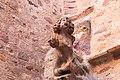 Rodez-Maison de Benoit-Gargouille CG-20140621.jpg
