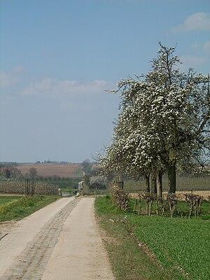 Limburg (Belgium) - Still in use: the Roman paved road between Tongeren and Tienen