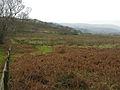 Rough grazing east of Ynys Edwin farm - geograph.org.uk - 1141358.jpg