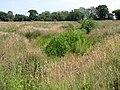 Rough meadowland, near Hanworth - geograph.org.uk - 205430.jpg