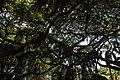 Royal Botanical Gardens, Peradeniya - panoramio (2).jpg