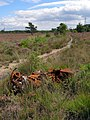 Rusting car remains, Town Common - geograph.org.uk - 510633.jpg