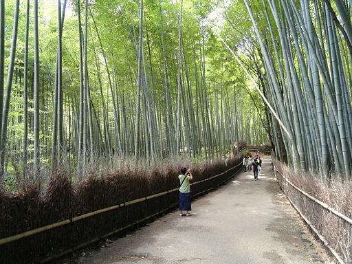 Sagano, Kyoto - DSC06123