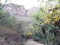 Sariska Tiger Reserve Beauty.jpg