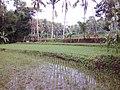 Sawahnya Pak Imam Said, Dusun Sumberrejo, Desa Bandungrejo, Kec. Pagak, Malang - panoramio.jpg