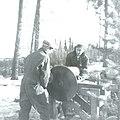 Sawing Firewood In Calling Lake Alberta (6306362372).jpg