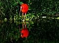 Scarlet Ibis Ana Cotta 2459787149.jpg